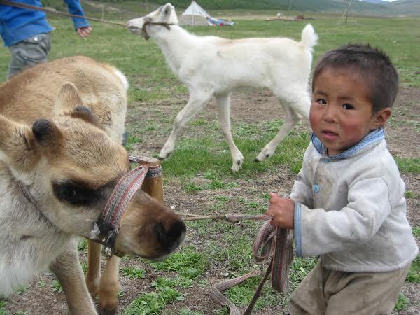 Mongoliafawns