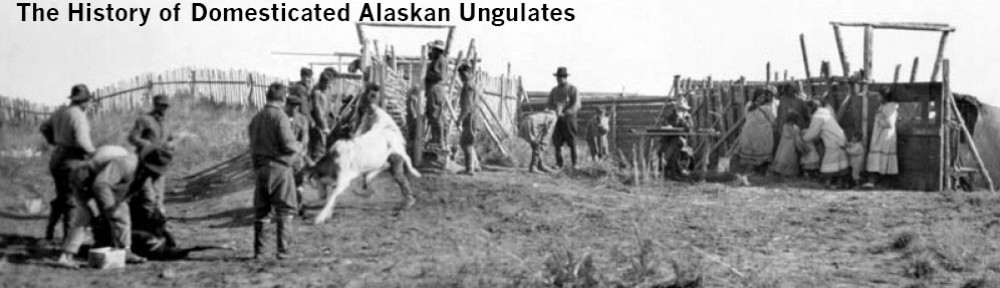 History of Alaskan Domesticated Ungulates