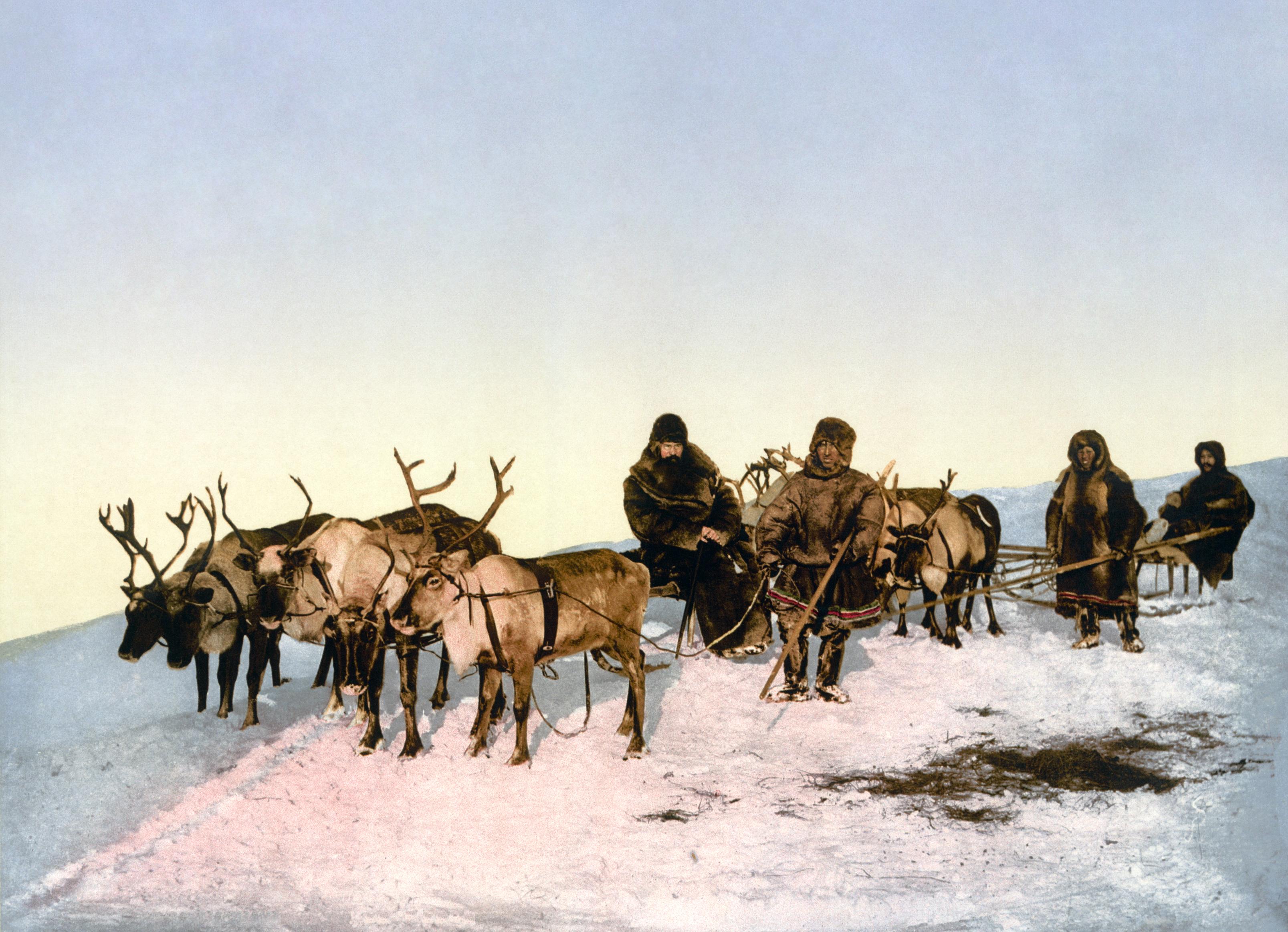 Archangel_reindeer3