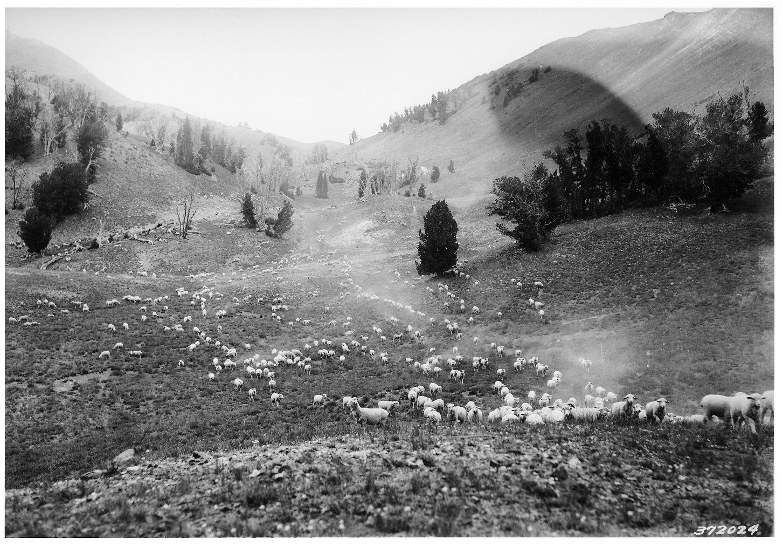 Tenderfoot Sheep Allotment - Wallowa NF - 1938